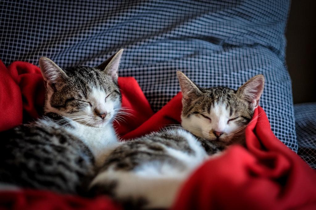 pets-cats