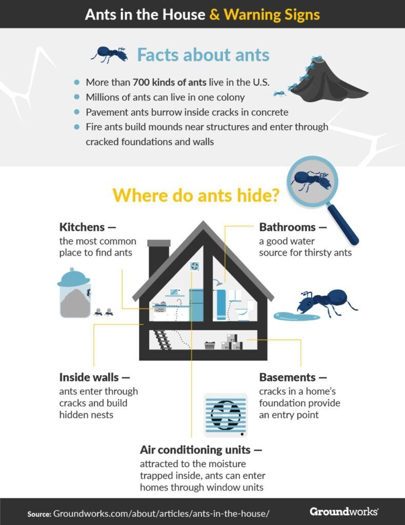 Ants infographic 1