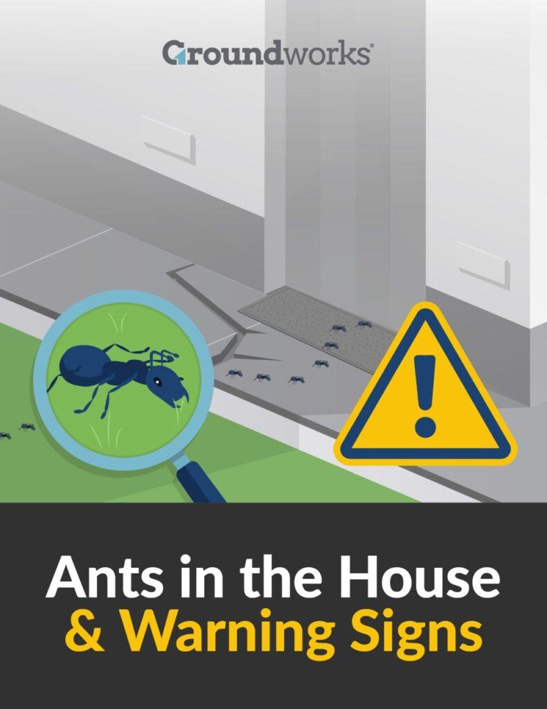 Ants infographic 3