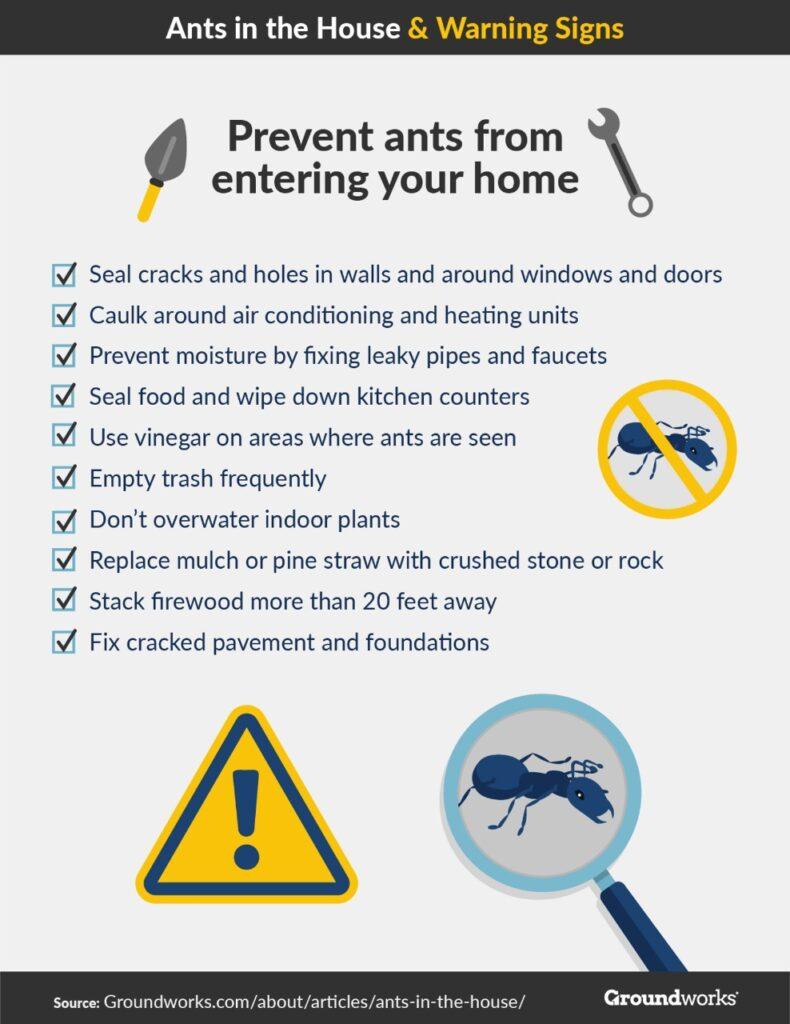 Ants infographic 2